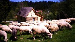 Sylwester- Zakopane- Domek przy Olczyskiej 2018