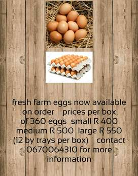 Farm fresh eggs available