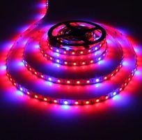 Taśma LED Rośliny Akwarium 5m GROW SMD 5050 Zimna IP20 4:1