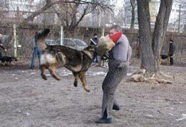 Дрессировка собак индивидуально