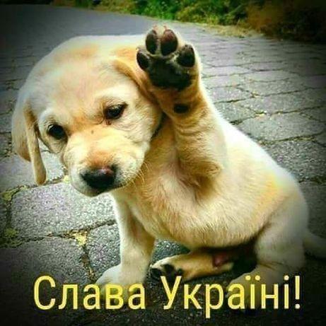 Демонтаж перегородок. Київ Киев - изображение 1