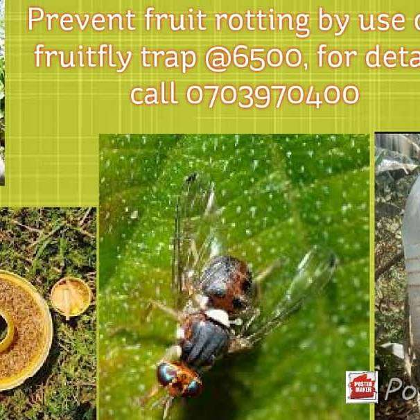 Fruit fly traps 0
