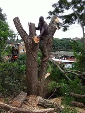 Exclusive tree cutting and removal services
