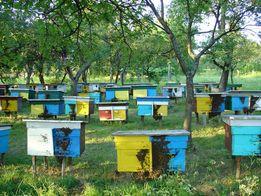 Продаем пчелопакеты.