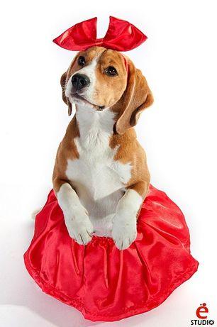 Юбочка + бант костюм для собаки Харьков - изображение 1