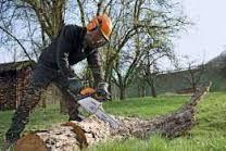 Зрізка дерев. Розчистка ділянок. Прізка дров