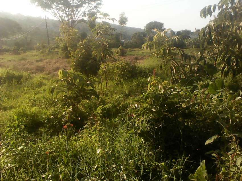 5 titled acres in Buloba half km from the main at 115M each 0