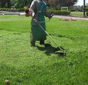 DOES YOUR LAWN REQUIRE A TRIM? 0