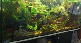 MEGAZESTAW przycinka siatka roślin