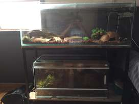 Reptile enclosure (glass) and fishtank with stand and canopie