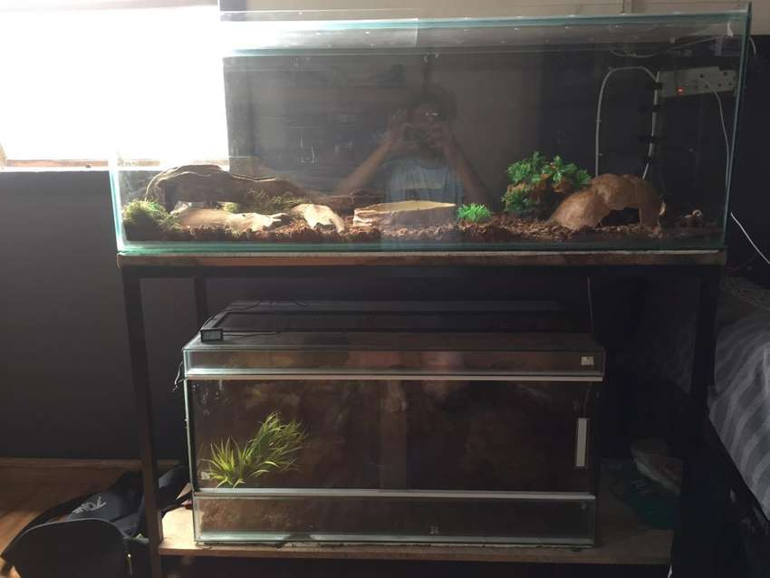 Reptile enclosure (glass) and fishtank with stand and canopie 0