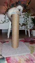 NR 10 Drapak dla kota solidny drapak dużego kota 50cm wysyłka gratis