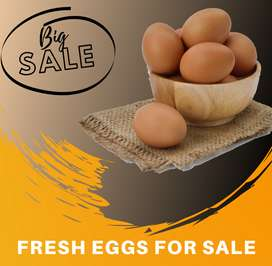 Fresh large eggs for sale!