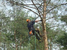 ścinanie wycinanie przycinanie drzew, alpinistycznie, koszenie trawy