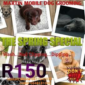 Martin Mobile Dog Grooming