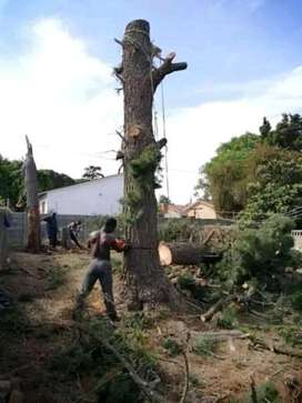 Tree Felling and Landscaping Services.