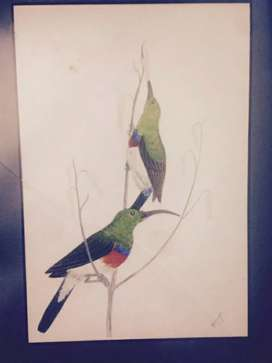 three watercolour painting of birds, in frames