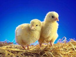 Инфракрасный обогреватель для цыплят, подогрев грунта, для инкубаторов