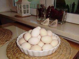 JAJA zielononóżki , smaczne i zdrowe jaja ..!
