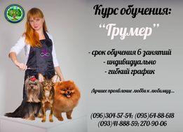 "Курс ""Грумер"" Обучение"