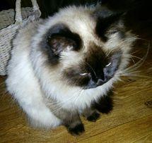 Супер котята!!!