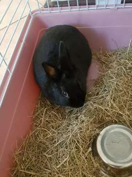 Baby rabbit / cage and accessories for sale all new