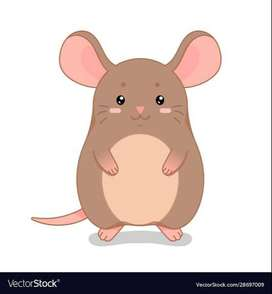 Mouse and Rats