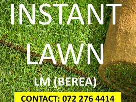 Instant lawn