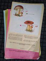 Плакаты о грибах ссср антиквариат