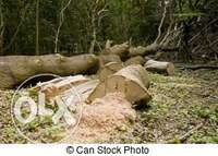 Image of tree felling and rubbish removals
