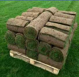 Roll on lawn grass