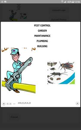 Pest Control and Carpet Cleaning