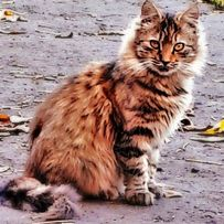 Пропала кошка! Песочин! Надия