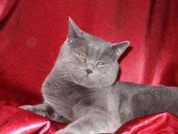 Вязка с любвиобильным котиком
