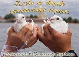 Белые почтовые голуби на свадьбу,Дни Рожденья ,на выписку с роддома!