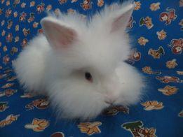 Для фотосессии кролики маленькие декоративные