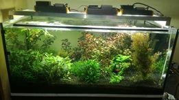 Solidna mocna belka oświetleniowa LED do akwarium 100cm
