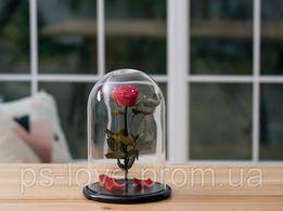 Роза в колбе Алый рубин. Доставка по всей Украине