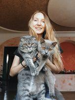Вязка!!! Опытный шотландский вислоухий кот