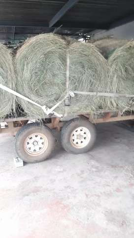 Fresh erogrostic round bales for sale green green green good quality..