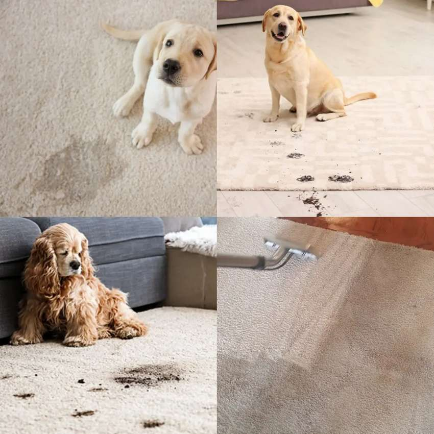 Carpet &  Rugs DEEP cleaned