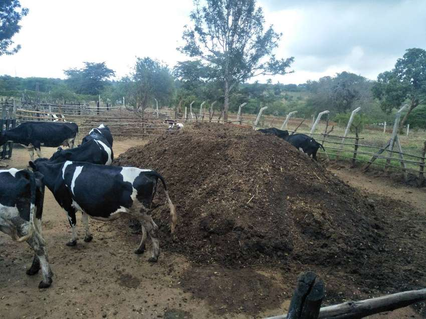 Manure for sale 0
