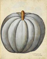 WARZYWA II piękne XIX w. grafiki do wystroju wnętrza - reprint