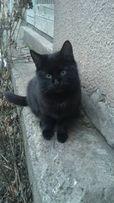 отдам черного зеленоглазого котенка, мальчик,6 месяцев