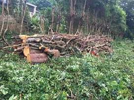 TREE FELLING AND GRASS CUTTING SERVICES