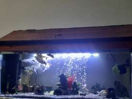 4ft fish tank  and cupboard with all accessories and fish