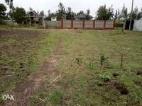 50 by 100 plot, Eastern bypass 0