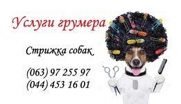 Стрижка собак 200гр. мелких пород на дому / с выездом