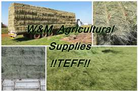 A grade Teff, Lucerne , Eragrostis and more