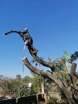 Tree Felling, site clearance and removal